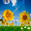 Sommerwiese und Windräder
