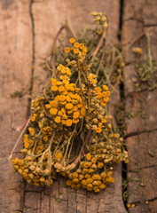 Dried tansy branches