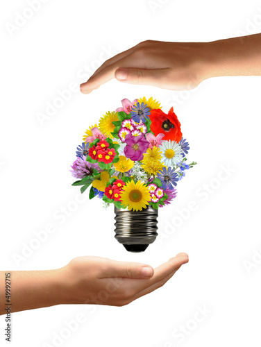 bulb flowers in hands