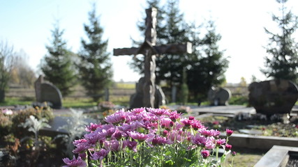 chrysanthemums flowers grow new grave cemetery monuments cross