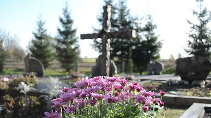 chrysanthemums flowers grow new grave cemetery monuments cross
