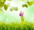 eine tulpe