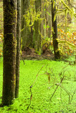 Rainforest wetland wildernis of West Coast BC