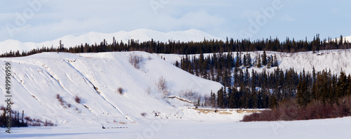 Yukon winter landscape and dogs pull musher sled