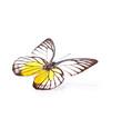 Echter Schmetterling – Zitronenfalter