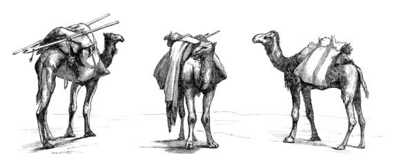 3 Camels - Attitudes