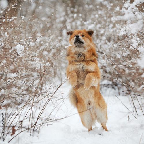 Fototapeten,hund,schnee,winter,wald