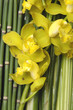 yellow orchid on bamboo background