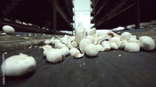 Mushrooms on conveyor for further processing