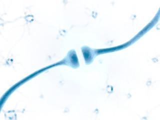 3d rendered illustration of a human receptor