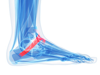 foot anatomy - inferior extensor retinaculum