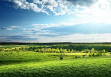 Fototapety field of spring grass and forest