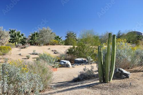 Deurstickers Canarische Eilanden Palm Desert landscape
