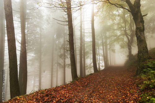 Foto op Canvas Bos in mist Fog in the forest