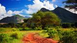 Rewolucjonistki zmielona droga, krzak z sawanną. Tsavo West, Kenia, Afryka
