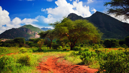 Red ground road, bush with savanna. Tsavo West, Kenya, Africa