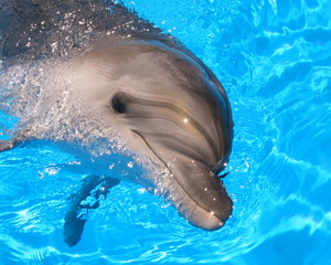 Stock Picture of a Dolphin - Stock Pictures Photos Images Pics