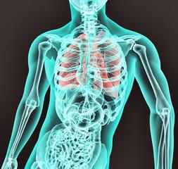 Radiografia aparato respiratorio,estomago