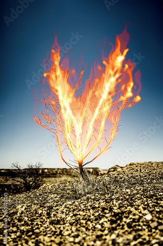 Leinwanddruck Bild the burning thorn bush