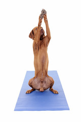 dog yoga pose