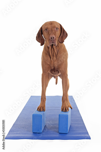 balancing on the yoga blocks