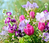 Fototapeta tulipany - tulipan - Kwiat
