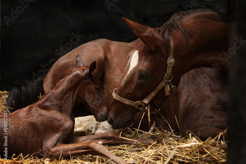 Spoed canvasdoek 2cm dik Paarden Begrüßung Stute und Fohlen
