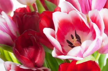 Tulpenstrauß aufgeblüht