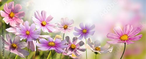 kwiaty - 50039707