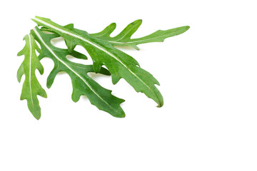 leaves of arugula salad isolated on white background