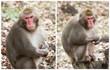 Wild monkey standing