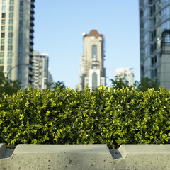 Small bush in front of city