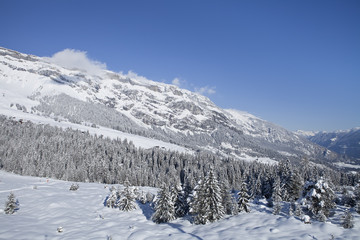 Winter trees in mountains covered with fresh snow. Switzerland,