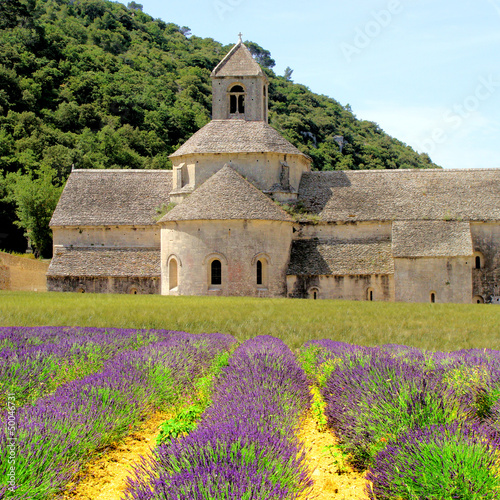 Senanque Abbey in Provence, France with lavender flowers