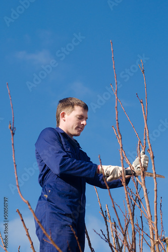 Man pruning branches with the saw