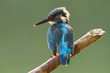 a kingfisher on a stick