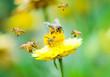 Leinwanddruck Bild - Group of bees on a flower