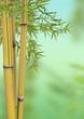 Fototapeten,bambus,welle,pflanze,wohlbefinden