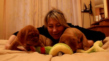 girl and two Dogue de Bordeaux puppy