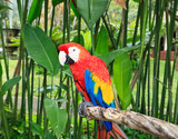 Colorful Macaw in nature