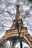 The Eiffel Tower in the branches of the tree.