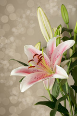 Oriental lily.