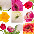 Collage from flowers by day of mother