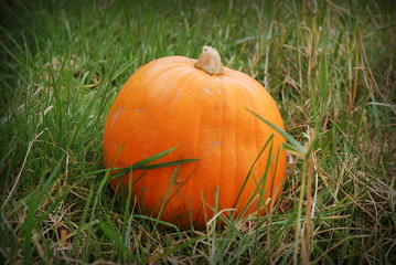 Pumpkin on the grass