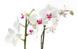 Fototapete Tropisch - Natürlich - Blume