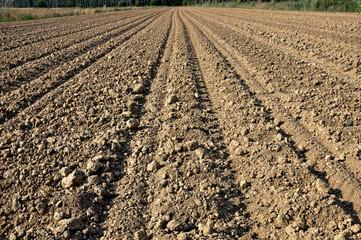 terra semina campo