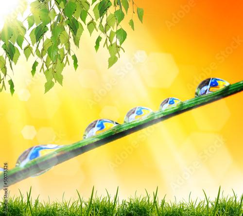 Leinwanddruck Bild drops of water on the grass