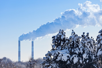 Industrial tubes smoke in front of blue sky and winter spruce fo