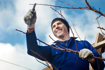 Man pruning brunches with the pruner
