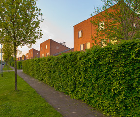 urban street with pavement and hedgerow